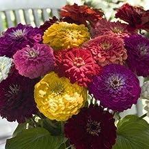 250 Giant California Zinnia Seeds/ Free Shipping by Carolina Seeds and Exotics