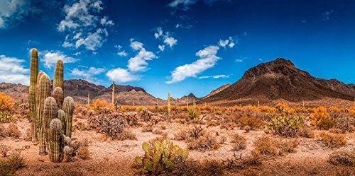 desert tank background
