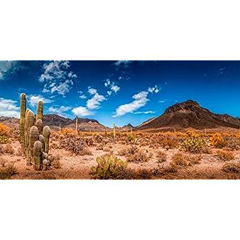 Reptile Habitat Various Sizes Terrarium Background 18 H x 72 W Orange Desert Sky with Cactus -