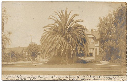 Real Photo Postcard Large Palm Tree and Home in Pasadena, California~102389 ()