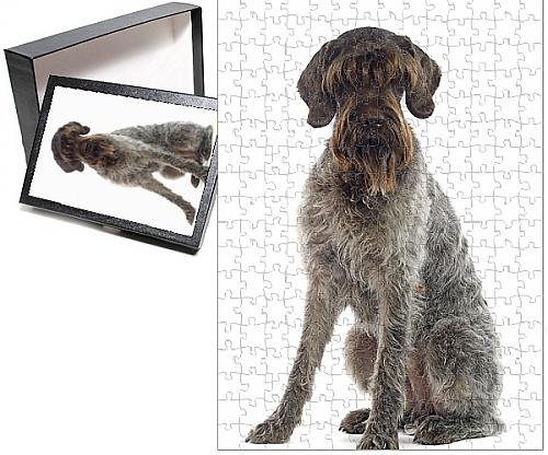 Photo Jigsaw Puzzle of Dog - German Wire-haired pointer / Griffon Korthals sitting down