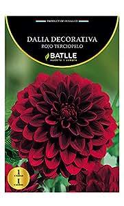 Bulbos - Dalia Decorativa rojo rerciopelo - Batlle