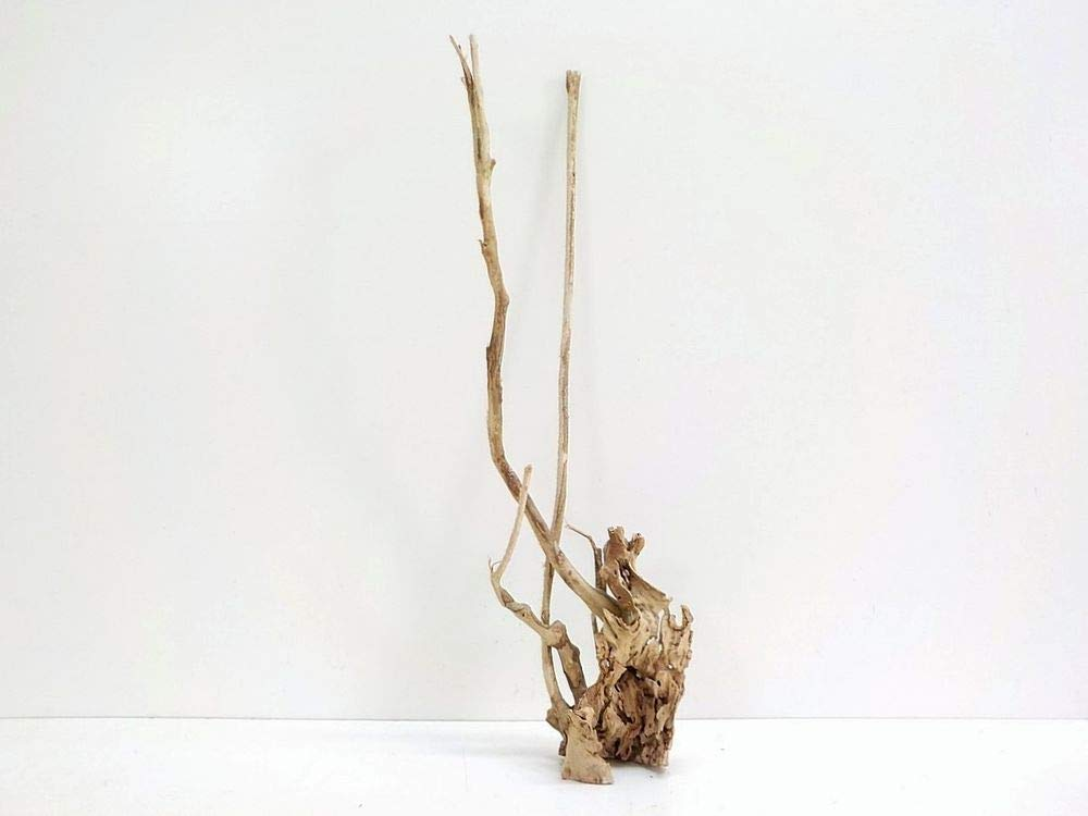 AQUARISTIKWELT24 XL Talawa Root Dimensions 25 x 11 x 74 No. 6898 Aquarium Root Wood Decoration Real Wood Large Decorative Branched Root Root Top