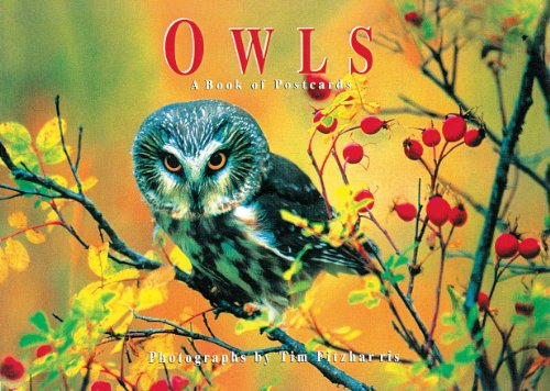Owls: A book of postcards (Firefly Postcard