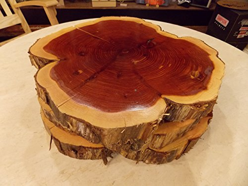 "10"" to 12"" Natural Decorative Carolina Red Cedar Rounds from Personal Handcrafted Displays"