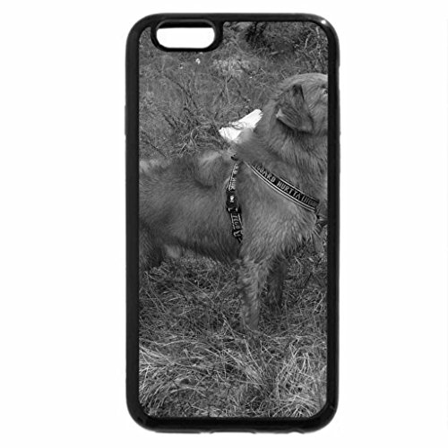 iPhone 6S Case, iPhone 6 Case (Black & White) - Two brown dogs