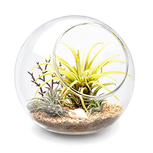 Mkono Plant Terrarium Display Glass Tabletop Succulent Air Plant Planter Globe Microlandschaft House, M