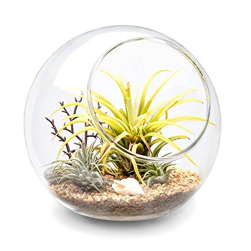 (Mkono Plant Terrarium Display Glass Tabletop Succulent Air Plant Planter Globe Microlandschaft House, M)