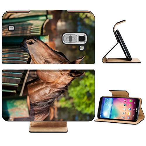 LG G Pro 2 Flip Case English breed horse portrait on the ranch in the evening the summer season IMAGE 28276415 by MSD Customized Premium Deluxe Pu Leather generation Accessories HD Wifi Luxury Protect