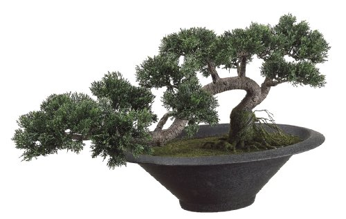 Silk Decor Trailing Cedar Bonsai Plant, Green