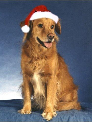 Download Pet Star Christmas Cards - Golden Retriever pdf