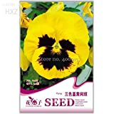 New Pansy Seeds Perennial Viola Tricolor 30+ Seeds Bonsai Yellow Pansy,