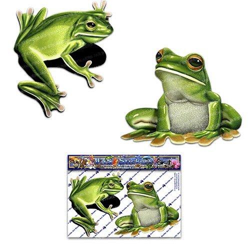Australian Green Frogs - 5