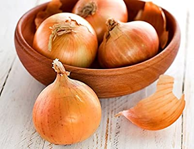 200+ ORGANICALLY GROWN GIANT Texas Early Grano 1LB Onion Seeds Heirloom NON-GMO, Allium cepa., Yellow, Delicious, High Yielding, From USA