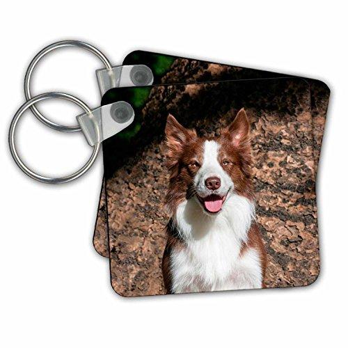 Danita Delimont - Dogs - Portrait of a Border Collie, MR - Key Chains - set of 2 Key Chains (kc_258123_1)