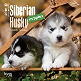 Siberian Husky Puppies 2016 Mini 7x7 (Multilingual Edition) by Browntrout Publishers (2015-07-15)