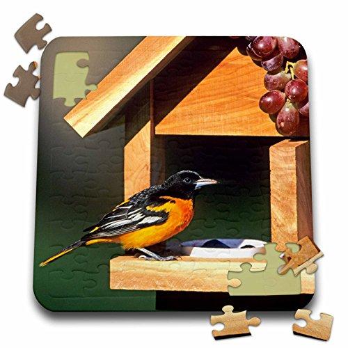 Baltimore Orioles Bird (Danita Delimont - Oriole - Baltimore Oriole male on jelly and grape feeder, Illinois - 10x10 Inch Puzzle (pzl_250919_2))