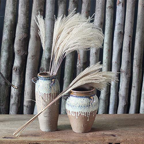 Original Ecological Dried Flowers, Wild Reed Flowers, Country Art Beautiful Home Decoration Furniture (16PCS) (Furniture Reeds Country)