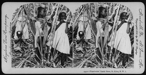 Photo: Photo of Stereograph,Picaninnies' Candy Store,Cane Field,British West Indies