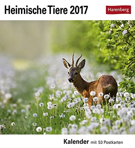 Heimische Tiere - Kalender 2017: Kalender mit 53 Postkarten