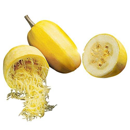 Burpee Vegetable Spaghetti Winter Squash Seeds 75 seeds