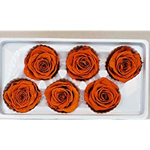 Ogi's Florist 100% Real All Natural Premium Preserved 6 Large Heads Roses | No Water Needed, Last for Months | Perfect Alternative to Artificial & Dried Flowers, DIY Crafts, Decoration (Orange) 84