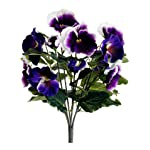13-Pansy-Bush-Purple-Cream-Pack-of-12