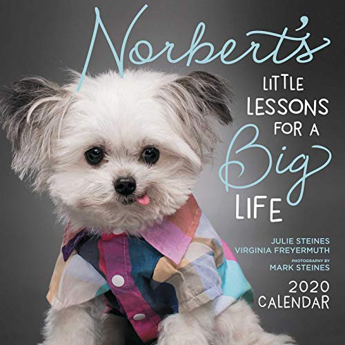 Norbert'S Little Lessons for a Big Life 2020 Square Wall Calendar por Julie Steines,Virginia Freyermuth