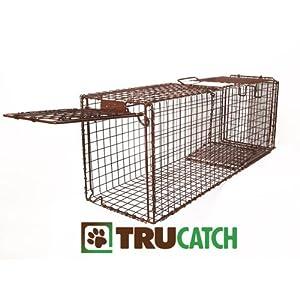 Best Animal Trap