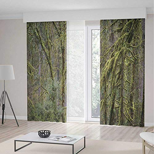 Rainforest Decorations,Curtains,Old Pine Trees in Wild Nature Moss Foliages Tranquility in Jungle Illustration,Theme,Living Room Bedroom Window Drapes,2 Panel Set,142