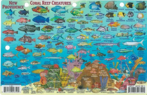New Providence Bahamas Dive Map & Reef Creatures Guide Franko Maps Laminated Fish Card - Buy ...