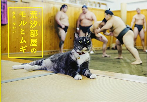 Mori and Mugi, the Sumo Stable Cats (English and Japanese Edition)
