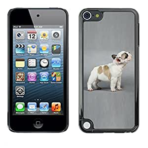 Paccase / SLIM PC / Aliminium Casa Carcasa Funda Case Cover - French Bulldog Puppy Grey Dog - Apple iPod Touch 5