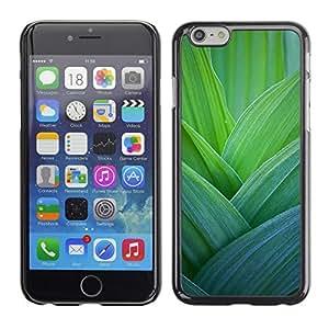 Paccase / SLIM PC / Aliminium Casa Carcasa Funda Case Cover para - Leaves Nature Spring Floral - Apple Iphone 6