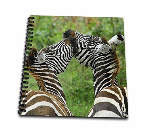 zebra drawing book - 5