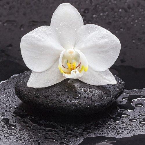 Wallpaper orchidee steine  Glasbild Weiße Orchidee auf nassen Steinen - Größe 20 x 20 cm ...