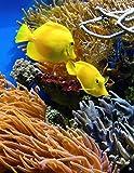 Notebook: Great Barrier Reef North Queensland