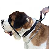 Canny Colossus Anti-Pull Dog Collar (One Size) (Black)