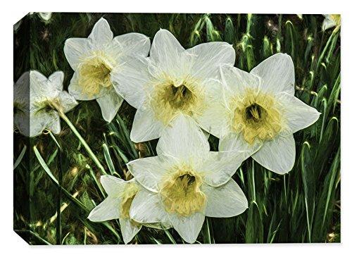 White Dafodils in Garden-Outdoor Wall Art - Weatherprint ...