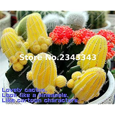 Mixed Cactus Bonsai Indoor Multifarious Ornamental Plants Bonsai Rare Succulents Flower Bonsai Can Purify The Air for Jardin 100