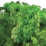 Asian Herbs Seed Pod Kit for Aerogarden (7-pod)