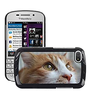 Hot Style Cell Phone PC Hard Case Cover // M00109611 Cat Animals Feline Portrait Of Cat // BlackBerry Q10
