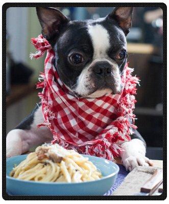 Purebred Cute Boston Terrier Super Soft Plush Queen Size Blanket 50