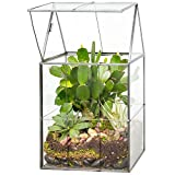 Glass Hinged Roof Terrarium, Succulent & Air Plant Greenhouse