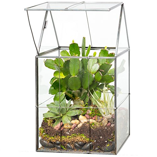 Deco Glass Geometric Terrarium, Succulent & Air Plant- Hinged (5.9 x 5.1 x 11 in)