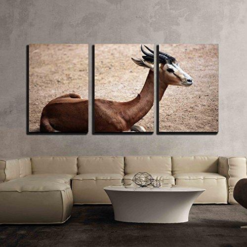 Mhorr Gazelle (Nanger DAMA Mhorr) Wild Life Animal x3 Panels