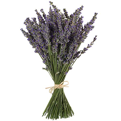 Dried Wildflower - TooGet Natural Lavender Bundles, Freshly Harvested 100 Stems Dried Lavender Bunch 16