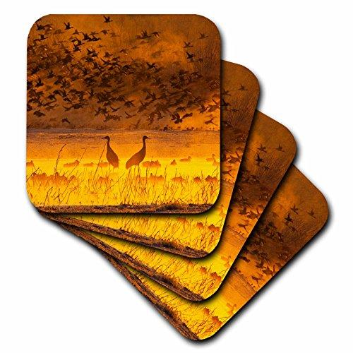3dRose cst_145157_1 Usa, New Mexico, Sandhill Cranes, Snow Geese Birds Us32 Bjy0010 Jaynes Gallery Soft Coasters, Set of (Snow Goose Bird)