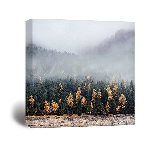 Square Pine Forest in the Fog