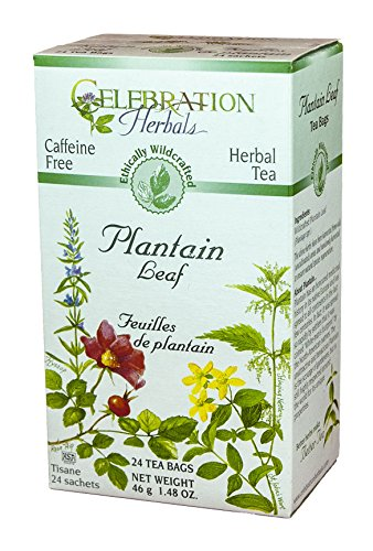 Celebration Herbals Plantain Leaf Tea Bags -- 24 Herbal Tea Bags by Celebration Herbals
